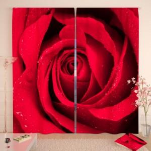 Фотошторы Яркая бордовая роза